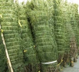 Christmas Tree Netting Raghav Agri Tech